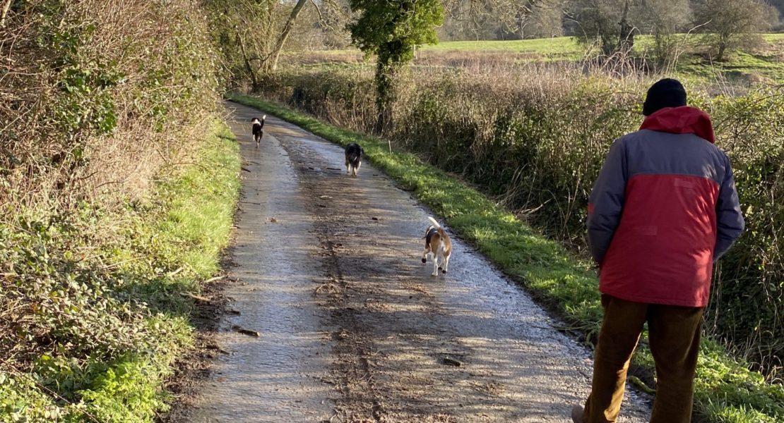 3 cães passeando com seu dono